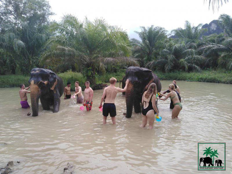 washing elephants in a river